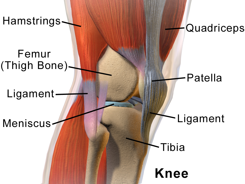 care este articulația genunchiului dureri acute la cotul mâinii drepte