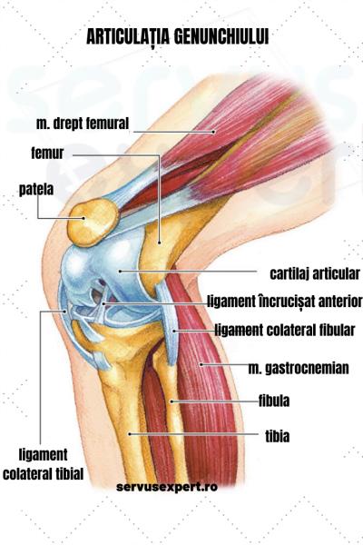 care este articulația genunchiului crize de șold și dureri severe