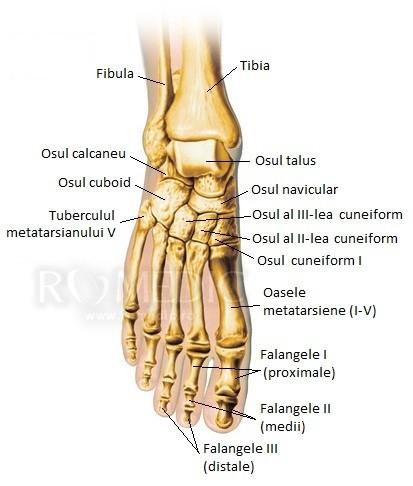 articulațiile picioarelor doare grozav