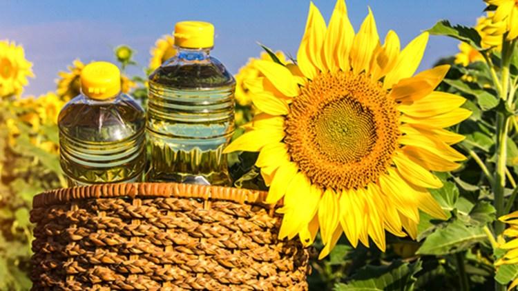 Articole de tratare a uleiului de floarea soarelui durere în articulațiile genunchiului care tratează