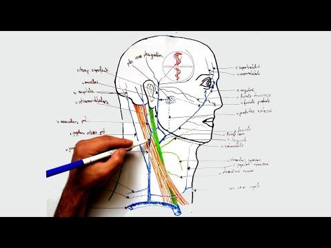 curs de artroză a articulației șoldului durere în genunchii articulațiilor șoldului