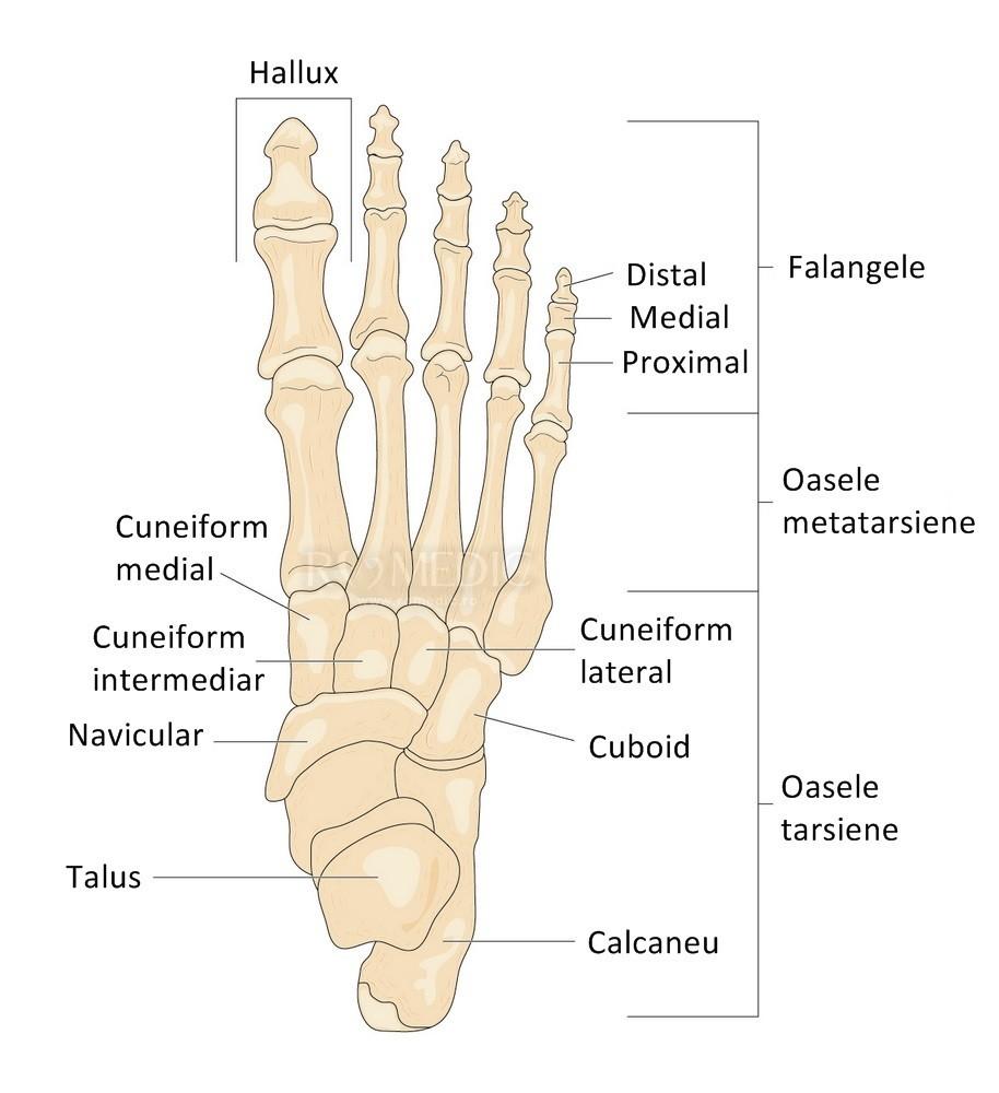 dureri articulare metatarsiene ale piciorului