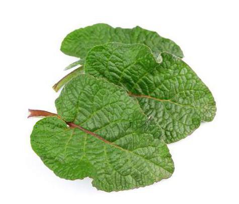 Blog Faunus Plant - 3 Plante pentru dureri reumatice, la îndemâna tuturor: Cum ajută fiecare?