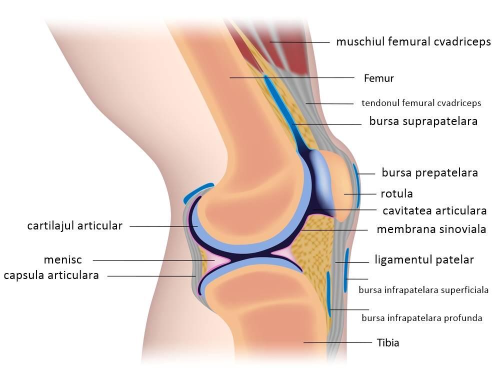 artroza teraflexă a tratamentului articulației genunchiului glandele bolii articulare