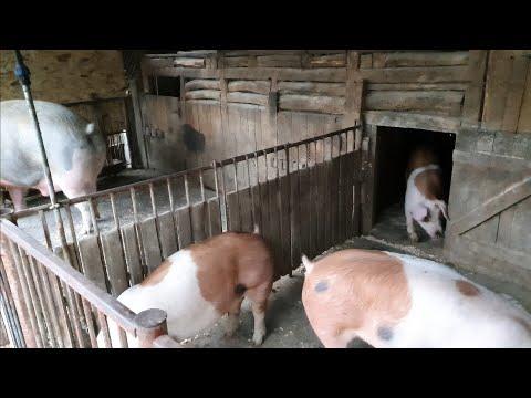 tratament cu artroza pielii de porc