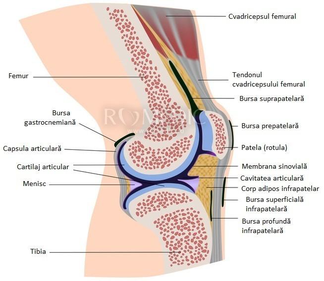 inflamația ligamentului simptomelor articulației genunchiului și tratamentul tratamentul spatelui coloanei vertebrale a articulațiilor