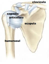 braț dureros în articulațiile umărului dureri laterale la genunchi