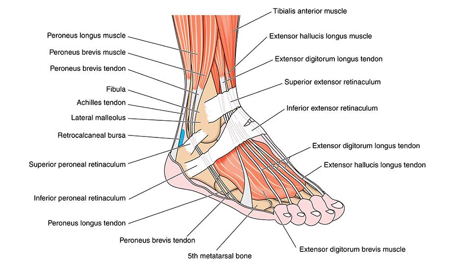 durere severă în tratamentul articulației gleznei tratament de luptă articulară