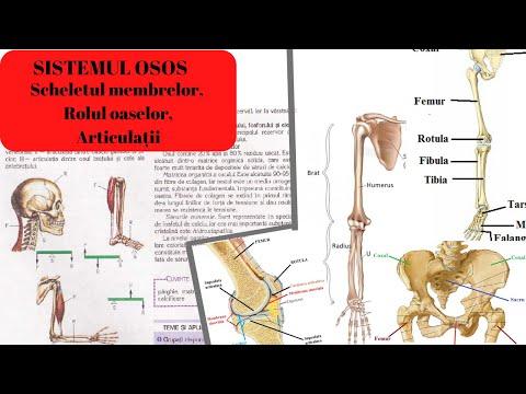 dureri articulare din licopid Miturile luptătorilor de aeronave despre tratamentul durerilor articulare