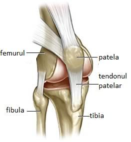 Tratamentul gonartrozei 3 grade ale tratamentului articulației genunchiului, Навигация по записям