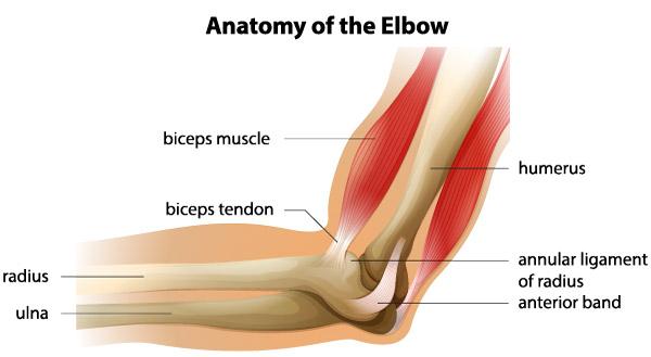 mâinile în articulația cotului rănit după dureri articulare de gimnastică
