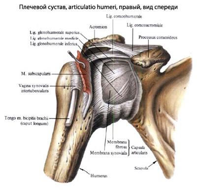 articulațiile degetelor degetelor doare deteriorarea ligamentelor colaterale ale articulației genunchiului