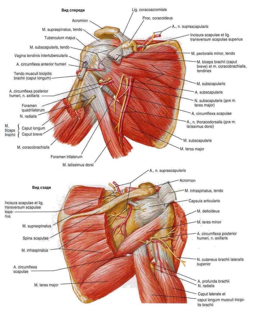 tratamentul buzei articulare a articulației umărului