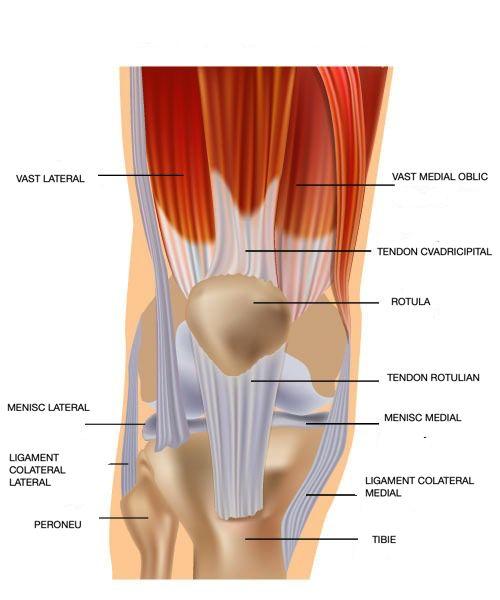 tratamentul rupturilor tendonului genunchiului durere cronică în articulații și mușchi