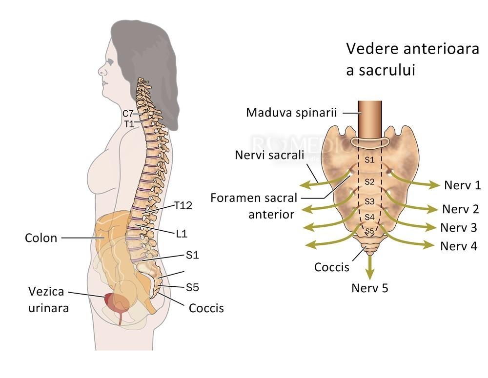 cum doare articulațiile coloanei vertebrale
