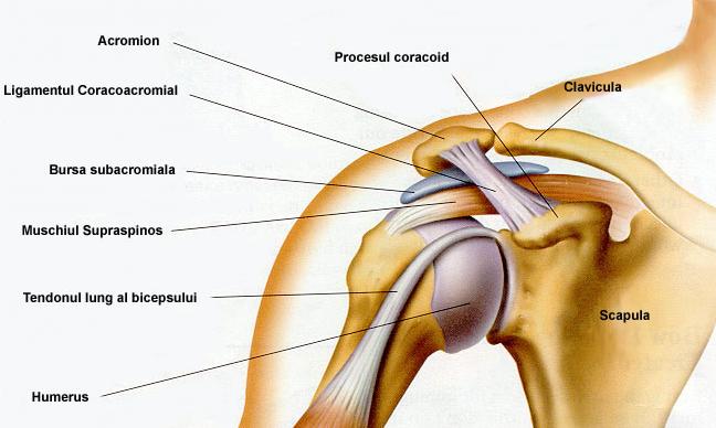 cum se tratează ligamentele de umăr