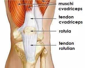 istoric medical care deformează osteoartroza articulației gleznei cum să consolideze ligamentele articulației genunchiului cu artroză