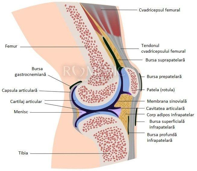 Durerea Articulatiilor - Tipuri, Cauze si Remedii Dureri articulare nyak