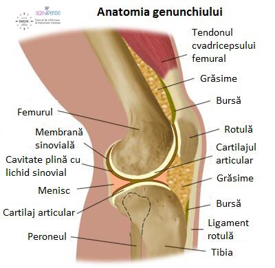 Tratamentul ligamentelor sfâșiate ale gleznei - fotolii-canapele.ro