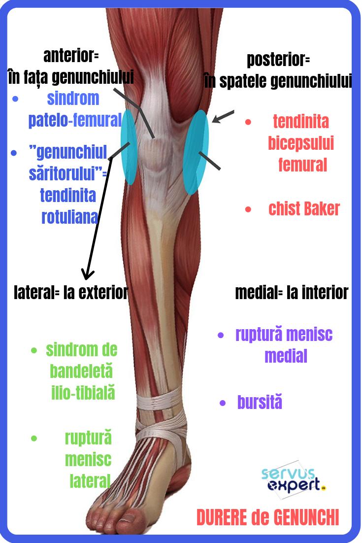 localizarea durerii în articulația genunchiului unde să tratați artrita artrită