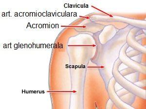 de ce articulațiile la genunchi doare la mers artroza genunchilor. articulația